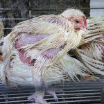 Imagen de mercado húmedo (Foto cortesía de Igualdad Animal)