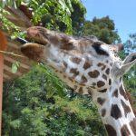 Zacango alberga una colección faunistica de 729 ejemplares con más de 131 especies